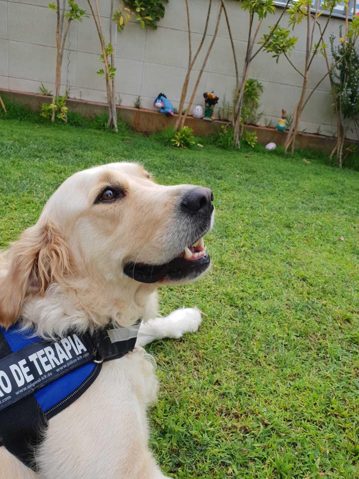 Actividades con perros de terapia